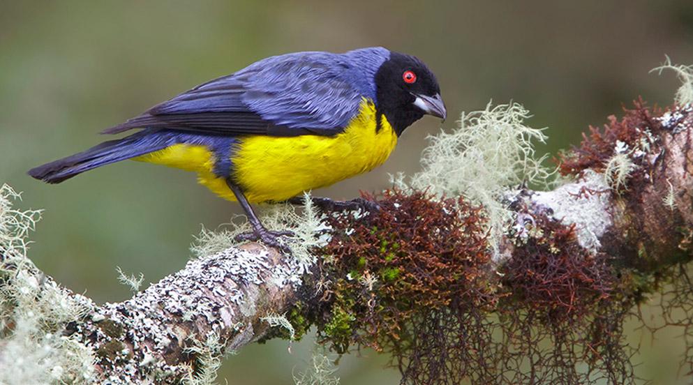 Birding obsevation paradise
